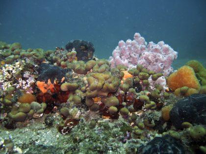 la-biodiversito%cc%88-nelle-trezze